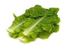 Korean Lettuce-Lactuca sativa Stock Photos