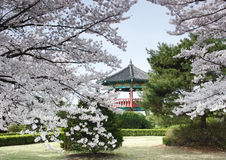 Korean Pavillion in a beautiful park. A traditional style Korean pavillion framed by trees in a park near Seoul, Korea Royalty Free Stock Photos