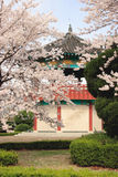 Korean Pavillion In A Park Near Seoul, Korea. Royalty Free Stock Photo
