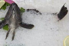 Korean raw fish ( sashimi ) on white noodle. Fresh Korean Raw Fish  (Sashimi) - empty Royalty Free Stock Photography