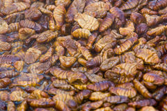 Korean Silkworm - beondaegi Stock Images