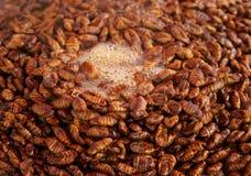 Korean silkworm pupus Royalty Free Stock Photo