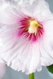 Korean traditional flower Stock Images