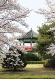 Koreanisches Pavillion hinter blühenden Bäumen. lizenzfreies stockfoto