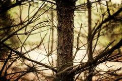 Korek drzewo Obrazy Stock