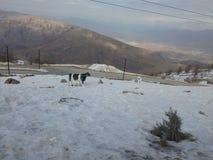 Korek mountain Royalty Free Stock Photo