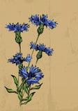 Korenbloemen vector illustratie