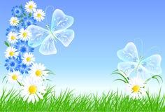 Korenbloemen, camomiles met groen gras vector illustratie