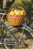 Korg av äpplen Royaltyfri Foto