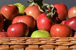 Korg av äpplen Royaltyfri Fotografi