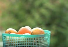 Korg av apelsiner Royaltyfria Bilder