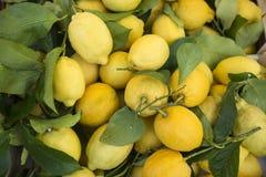Korg av citroner Arkivbilder