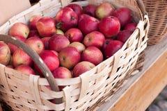 Korg av frukt Royaltyfri Fotografi