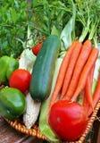 Korg av grönsaken Royaltyfria Bilder