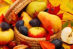 Korg av höstfrukter arkivbilder