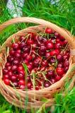 Korg av körsbär på ett gräs arkivbilder
