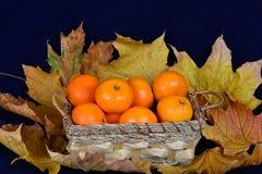 Korg av mandariner Arkivbilder