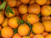 Korg av nya apelsiner Arkivfoton