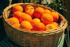 Korg av nya apelsiner Royaltyfri Foto