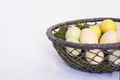 Korg av Pale Colored Eggs på mossa med vit bakgrund Arkivfoton