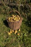 Korg av pears Royaltyfri Foto