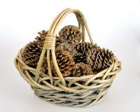 Korg av pinecones i en vävd korg royaltyfri bild