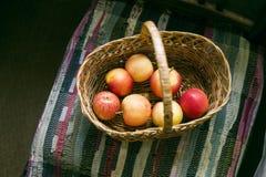 Korg av äpplen på stol, lantlig stilleben för höst Royaltyfri Foto