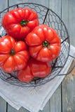 Korg av självodlade röda tomater Royaltyfri Foto
