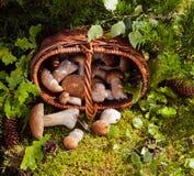 Korg av wild champinjoner Arkivfoto