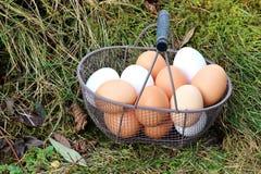Korg med ägg royaltyfri foto