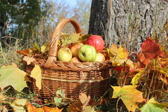 Korg med äpplen Royaltyfri Foto