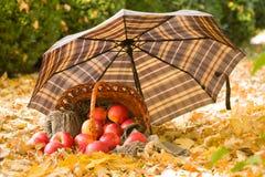 Korg med äpplen på höstsidor i skogen Arkivbilder