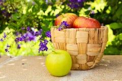 Korg med äpplen på stenyttersida på härlig blommaträdgård Royaltyfri Foto