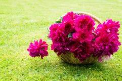 Korg med blommor Royaltyfri Bild
