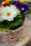 Korg med blommor Arkivfoton