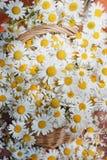 Korg med chamomiles Royaltyfria Foton