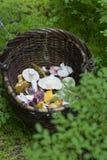Korg med champinjoner i skogen royaltyfri fotografi