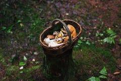 Korg med champinjoner i skogen på en stubbe Arkivfoto
