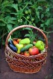 Korg med grönsaker Arkivbilder
