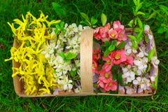 Korg med härliga vårblommor Fotografering för Bildbyråer