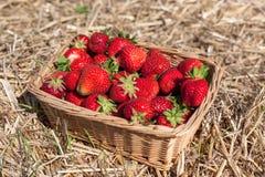 Korg med jordgubbar Fotografering för Bildbyråer