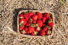 Korg med jordgubbar Arkivfoto