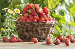 Korg med jordgubbar arkivbilder