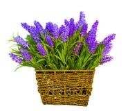 Korg med lavendel Lavendel som isoleras på wh Royaltyfria Bilder