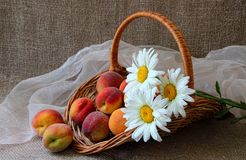 Korg med mogna persikor Arkivbild