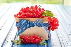 Korg med nya röda vinbär Arkivfoto