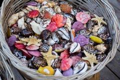 Korg mycket av färgrika snäckskal och sjöstjärnor Royaltyfria Bilder