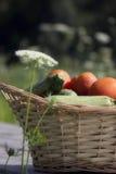 Korg mycket av grönsaker Fotografering för Bildbyråer