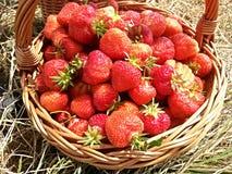 Korg mycket av jordgubbar Royaltyfri Bild