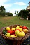 Korg mycket av nya frukter och grönsaker i trädgården arkivbild